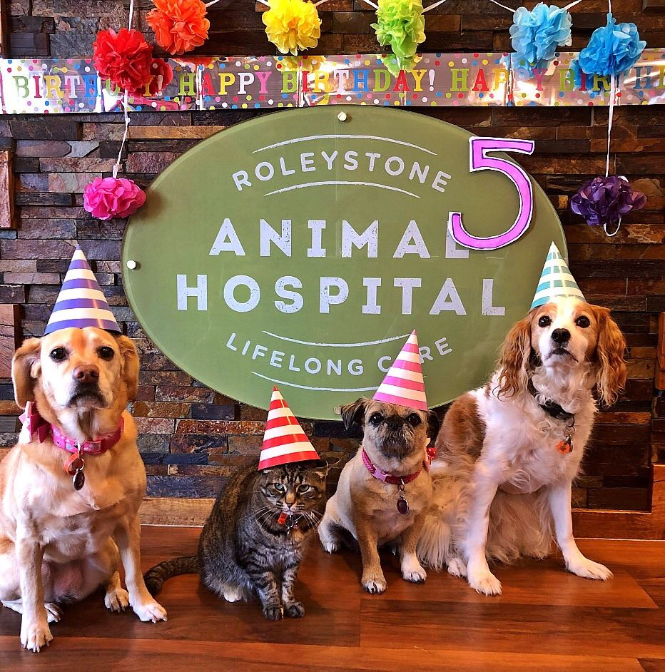 During The Month Of July In Celebration Our 5th Birthday We Are Donating 5 From Every Anaesthetic Divided Equally To Darling Range Wildlife